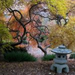 A photo of the japanese garden, a small pagoda, and fall foliage.