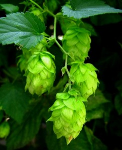 History & Horticulture of Beer - CANCELLED