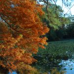 A photo of a tree with orange leaves in mirror lake.