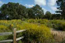 Wildflower Meadow Walk & Talk