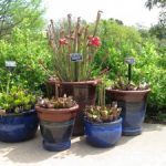 A photo of a display of different carnivorous plants in the WoW Children's Garden.