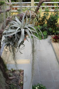 SOLD OUT: Air Plant Workshop