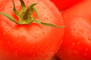 Summer Sampler: Tomato Tasting