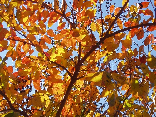 Fall Color Walk & Talk