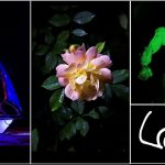 Photo Examples of Light Painting