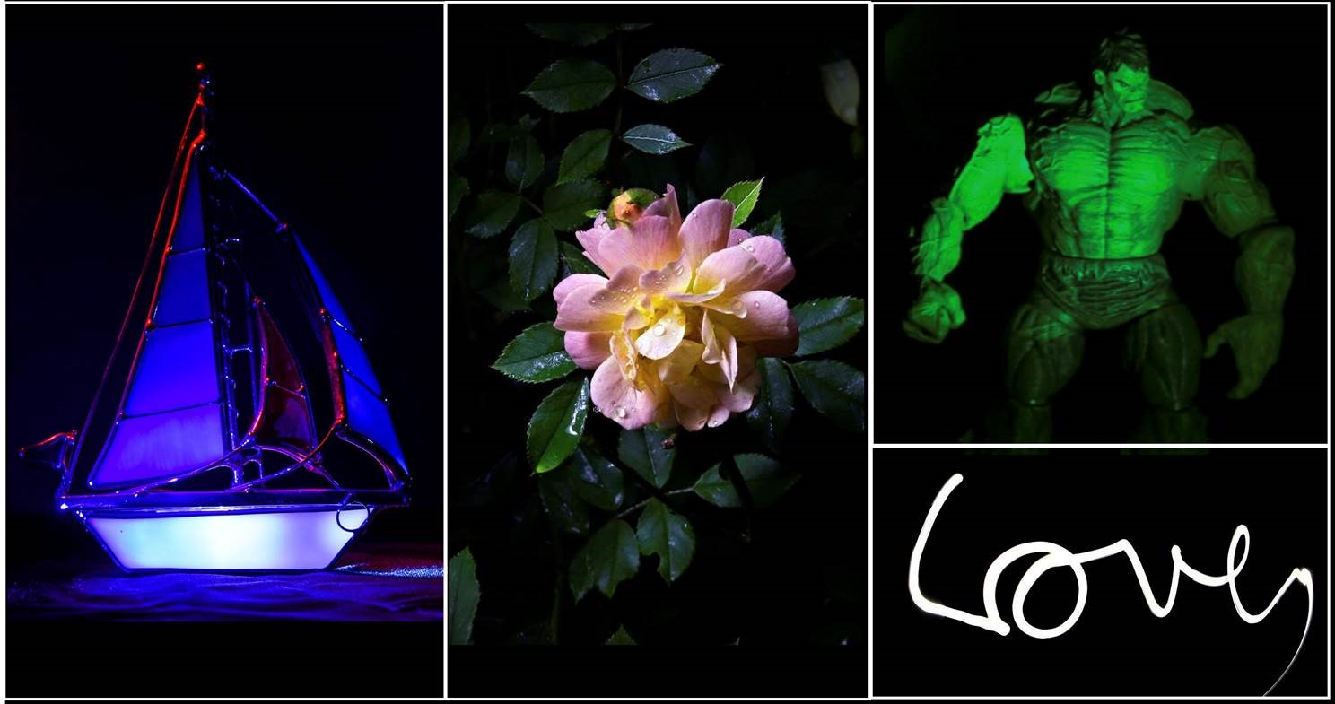 Digital Photography: Light Painting – Norfolk Botanical Garden