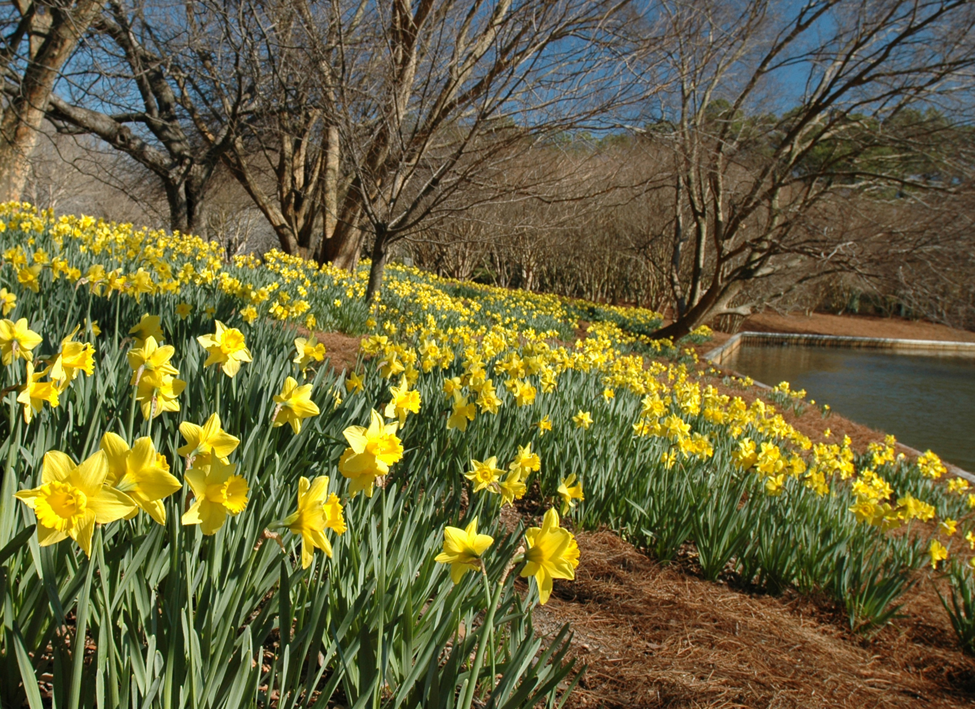 Bulbs of the Botanical Garden Walk & Talk