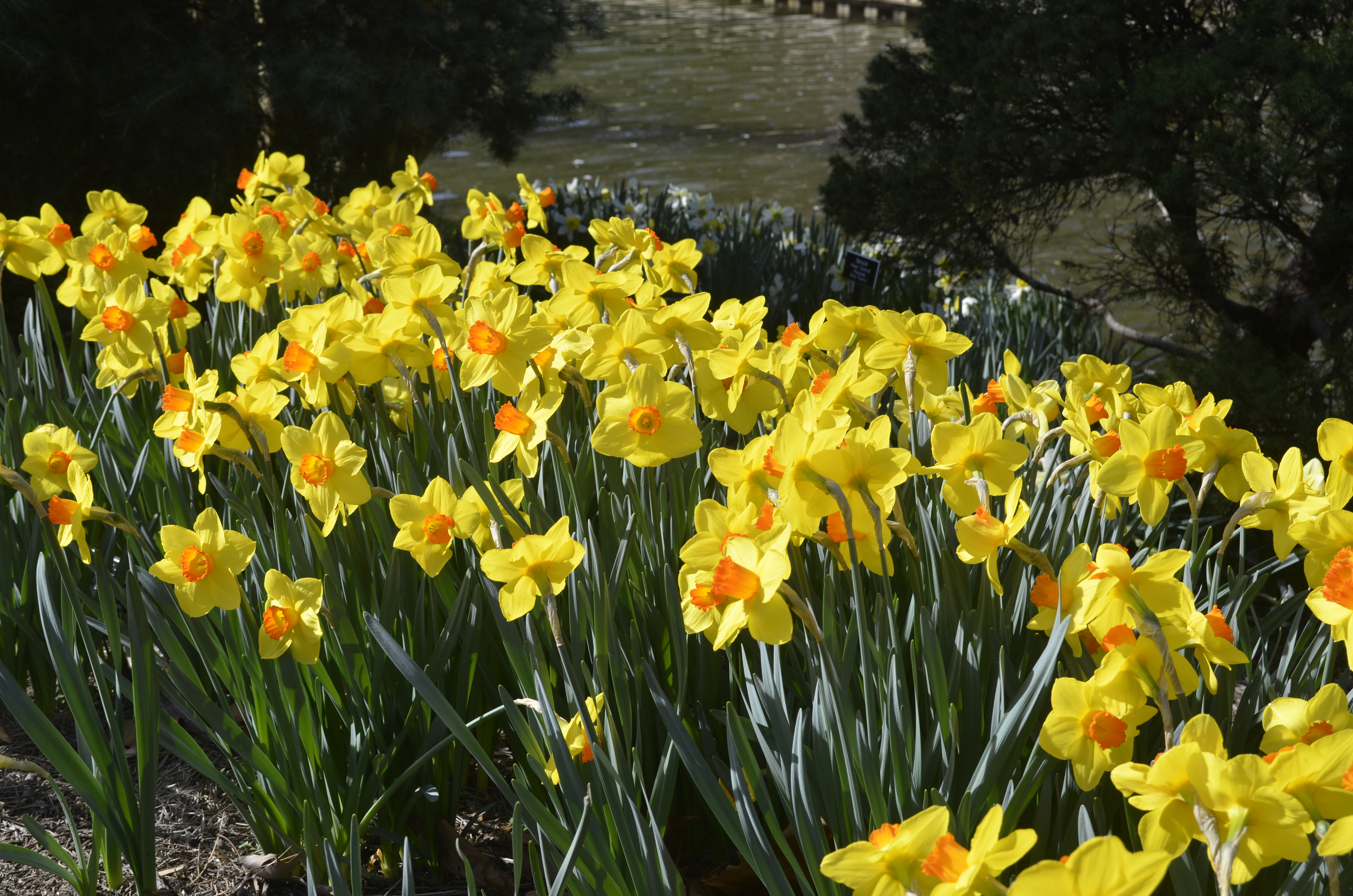 Coffee & Conversation: Best Bulbs for Tidewater