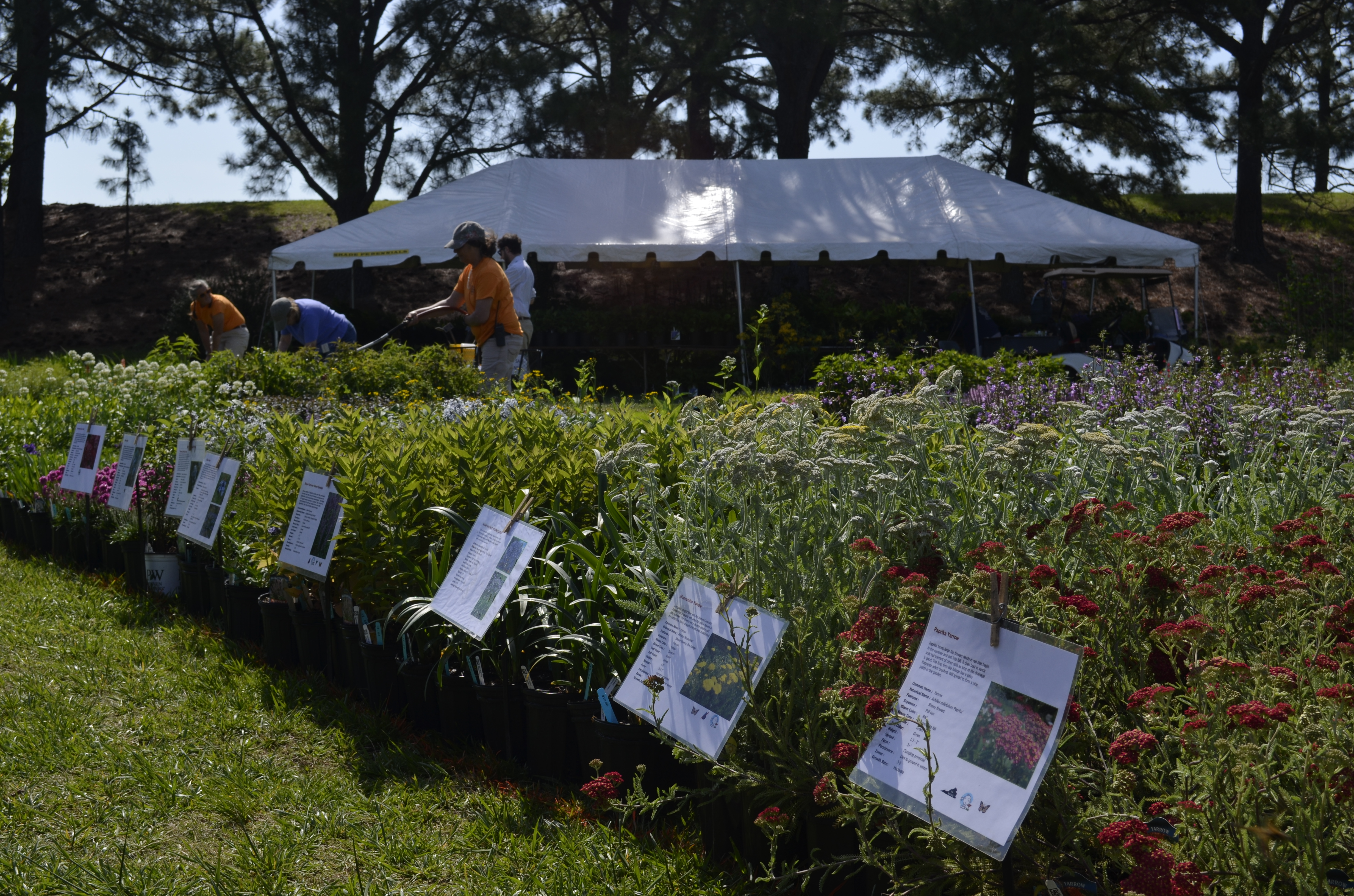 SOLD OUT Plant Sale Preview