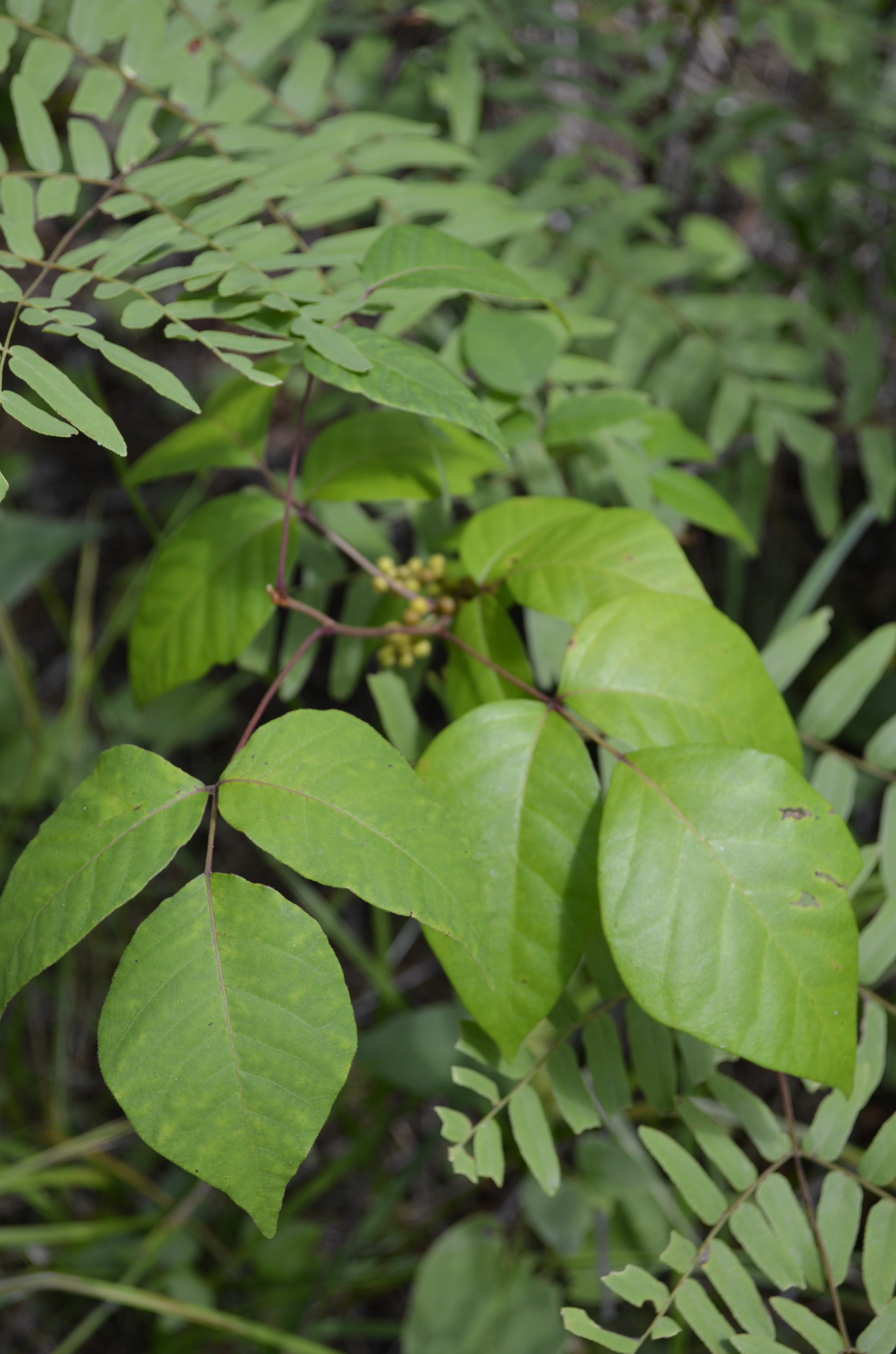 Invasive Plants Walk & Talk