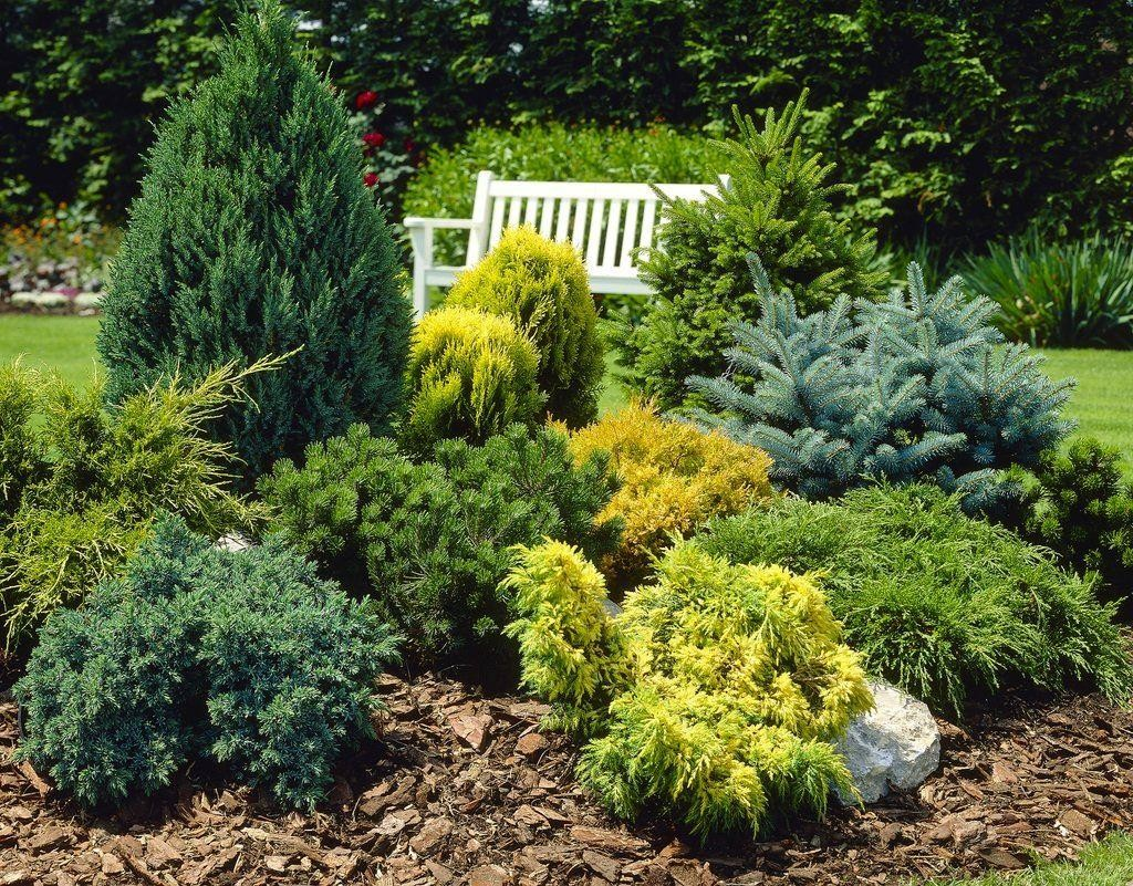 Selecting and Planting Shrubs and Trees