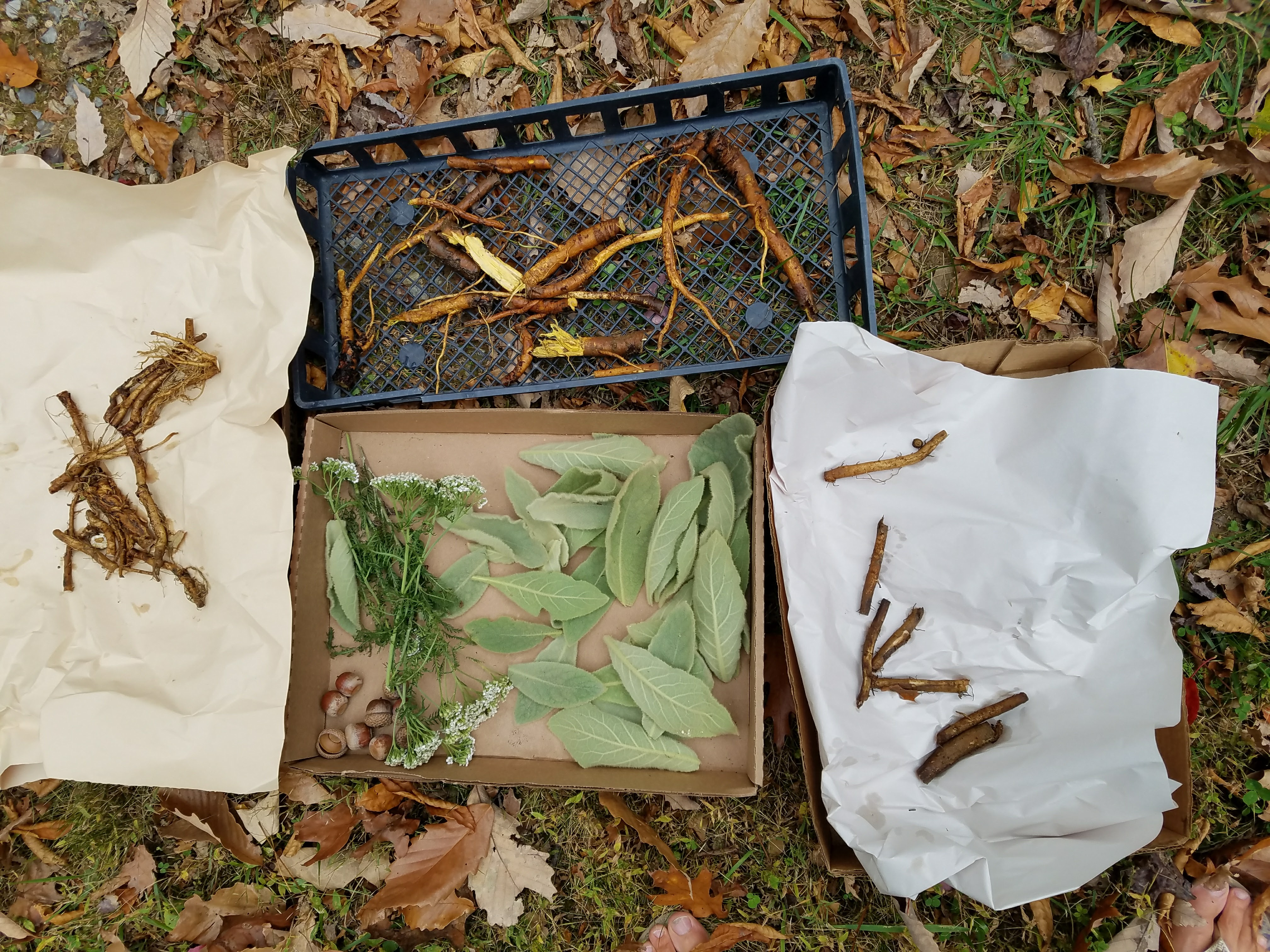 Roots, Bark, Berries & Seed Medicine